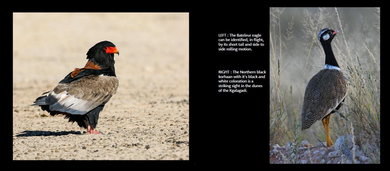 birds14_15
