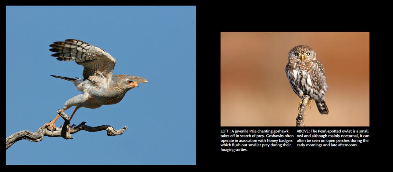 birds6_71